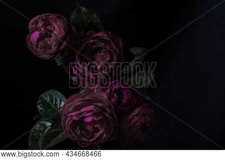 Moody Flowers. Roses Peony Purple On A Black Background. Blur And Selective Focus. Low Key Photo. Ex