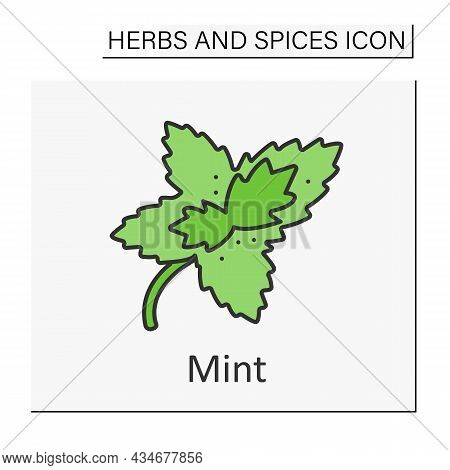 Mint Color Icon. Aromatic Herb. Chilling Plant For Tea, Hard Drinks And Medicine. Herbs And Concept.
