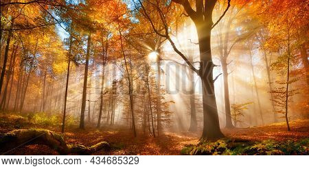 Enchanting Sun Rays Falling Through The Mist In A Golden Forest In Autumn. The Beauty Of Nature In V