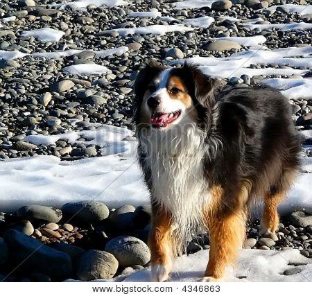 Happy Dog On Rocky River Bottom.