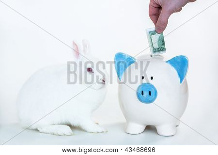 White bunny sitting beside blue and white piggy bank with hand putting money in on white background