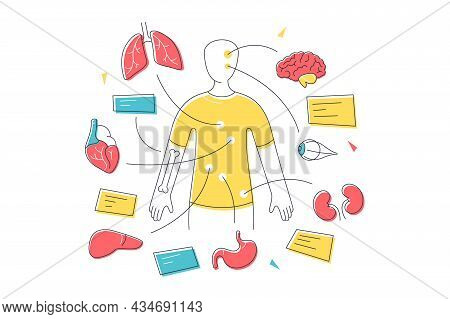 Human Body Organ Systems And General Anatomy Vector Illustration. Internal Organs For Education Line