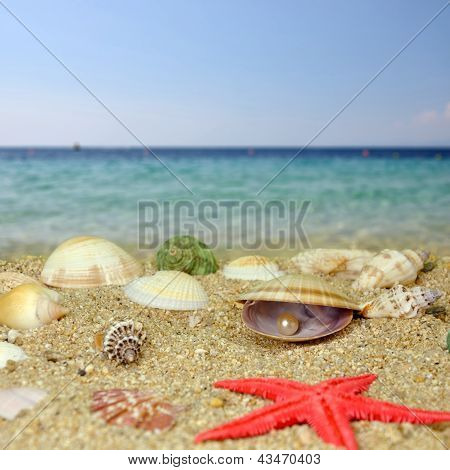 Sea Shells And Perls