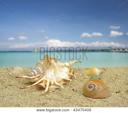 Sea Shell On The Beach