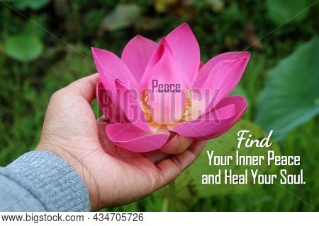 Single Word - Peace On Pink Lotus Flower Or Nelumbo Nucifera Blossom In Hand. With Inspirational Quo