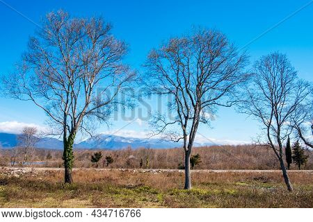 Three Trees Without Leaves On A Background Of Mountains. Autumn In The Highlands