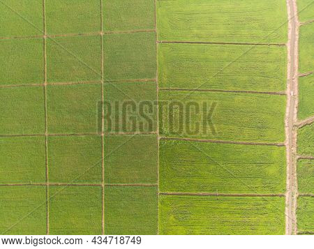Photos Of Green Rice Fields Aerial Shot Of Drone. Patterns Of Rice Fields During Cultivation In Asia