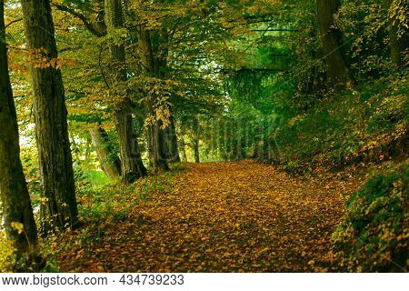 Autumn Alley In A Park Multi-colored Trees Branches In Sunny Forest. Autumn City Park Nature Scene F