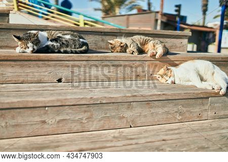 Group of stray cats sleeping outdoors on a sunny day. Sunbathing together, having a nap tired and resting lying on the floor