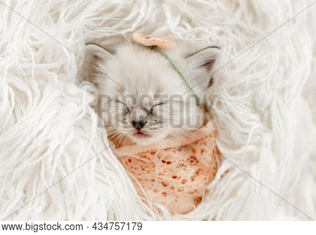 Adorable little ragdoll kitten sweety sleeping swaddled in fur and knitted blanket with flower on its head during newborn style photoshoot in studio. Cute purebred kitty portrait
