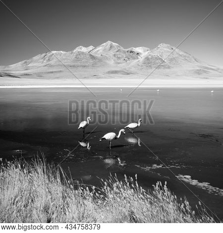 Laguna Canapa With Flamingo, Bolivia - Altiplano. South America - Bw