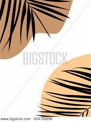 Tropical Palm Leaves. Summer Tropical Leaf. Summer Concept.