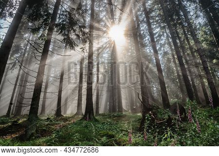 Panorama Of Czech Beautiful Misty Forest.magical Sun Light.scenic View Of Fresh Green Nature With Su