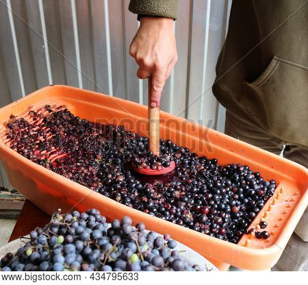 Preparation Of Raw Materials For Homemade Wine And Juice By Squeezing Grape Berries, Manual Pressing