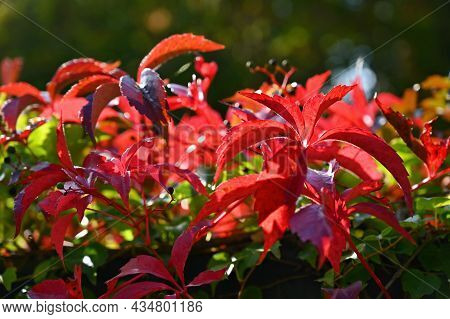 Autumn Background. Beautiful Colorful Leaves In Nature With The Sun. Seasonal Concept Outdoors In Au