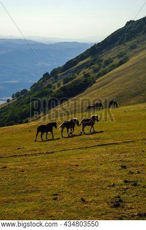 Wild Horses Grazing On Monte Cucco Regional Park, Umbria, Italy
