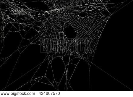 Real frost covered spider web isolated on black. For spooky Halloween decoration.