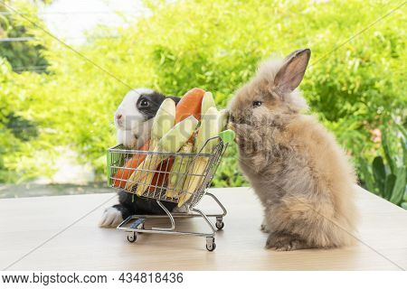 Easter Holiday Bunny Animal And Shop Online Concept. Adorable Two Baby Rabbit  Pushing Shopping Bask