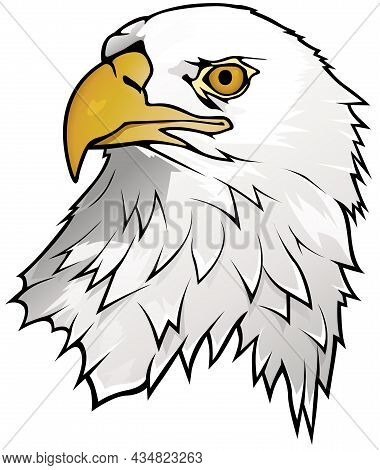 Bald Eagle Portrait Isolated On White Background - Graphic Illustration, Vector