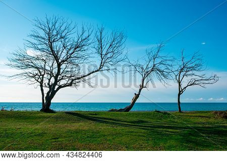 Three Bare Trees Without Leaves On The Horizon Behind Them The Sea. Landscape On Trees By The Sea.