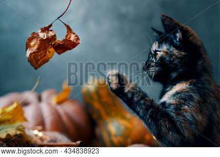 Cute Little Cat Playing With A Dry Autumn Leaf. A Cat And Two Large Ripe Pumpkins Of Different Shape