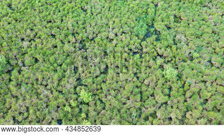 Springtime Wetland In Fresh Green Meadow From Drone View, Podlaskie Voivodeship, Poland, Europe