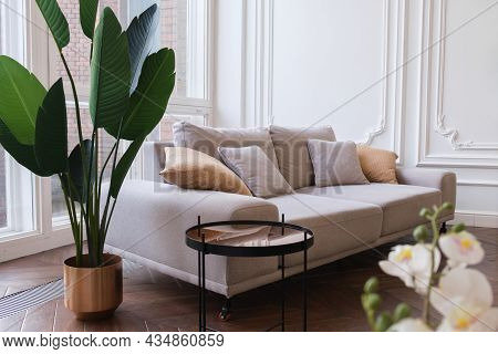 Cozy Living Room With A Large Sofa, Houseplants, White Walls And Floor Windows. Large Triple Sofa Wi