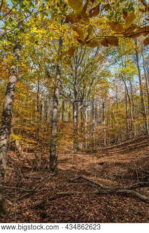 Stunning Colorful Foliage On The Large Trees In The Forest On A Bright Sunny Day In Autumn
