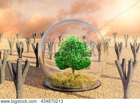 Desert Oasis With Green Tree, Grass And Flowers Protected By A Glass Dome. Concept Of Deforestation