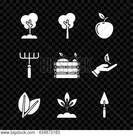 Set Tree In The Ground, Apple, Leafs, Plant, Garden Trowel Spade Or Shovel, Rake And Wooden Box For