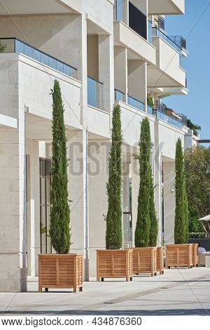 Tall Cypress Trees In Wooden Pots Decorate The Facade Of A Modern Building In Europe
