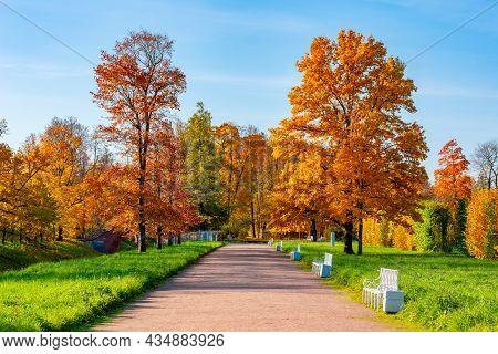Golden Fall In Alexander Park, Tsarskoe Selo (pushkin), Saint Petersburg, Russia