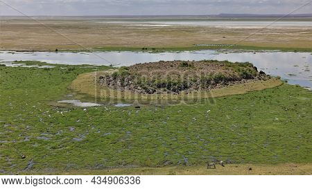 Green Vegetation Is Visible On The Surface Of The Swamp. In The Center Is A Small Island. Zebras Gra