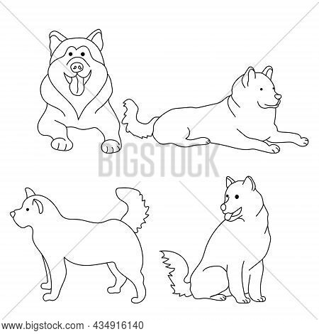 Dog Breed Alaskan Malamute, Set Of Outline Contours Of Dogs In Various Poses Vector Illustration