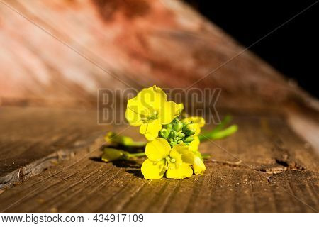 Fresh Arugula Or Rucola Leaves With Flower Over On A Wooden Background