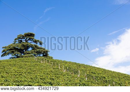 Panoramic Countryside In Piedmont Region, Italy. Scenic Vineyard Hill Close To Barolo.