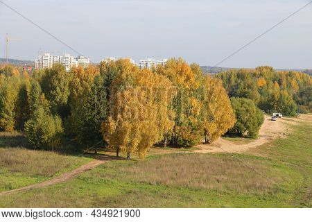 Birch Grove And Dirt Country Road, Yellowed Foliage, Autumn Background