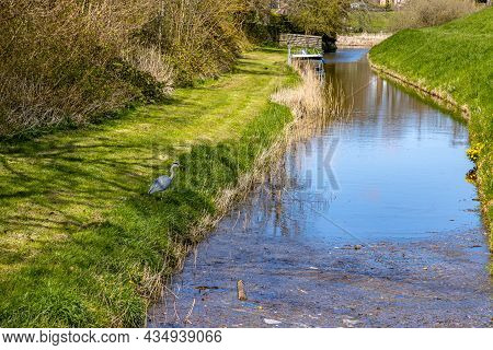 Small Canal Among Green Grass, Wild Plants And Brown Thickets, A Heron With A Boat And A River Mouth