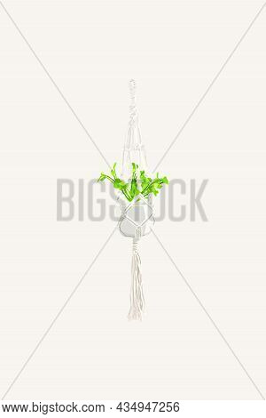 The Flowerpot Is Suspended On A Grid. Vector Illustration