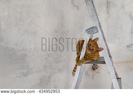 Funny Young Red Tabby Cat Sits On Top Step Of Stepladder While Renovating Room And Looks At Camera.