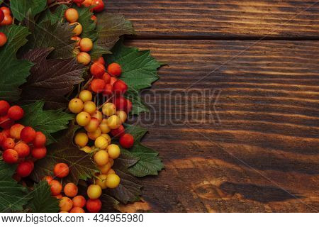 Red - Yellow Viburnum And Rowan Berries With Green Autumn Leaves On Brown Wooden Background With Emp
