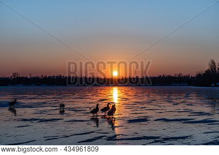 Sunset View Of Beihu National Wetland Park, Changchun, China
