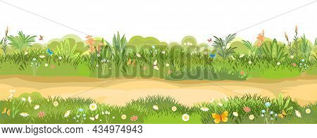 Rural Road To Green Glade. Summer Meadow. Trail. Juicy Grass Flower Close Up. Grassland. Country Tri
