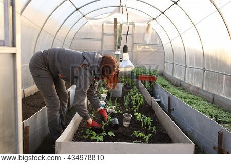 The Girl Is Planting Tomatoes In The Greenhouse. A Woman In A Glove And A Gray Suit Is Planting Seed