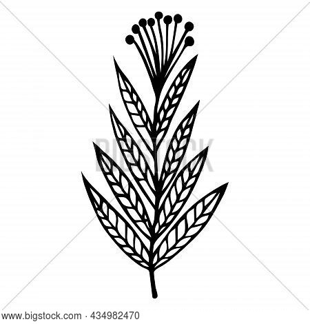 Field Herb With Veined Leaves Vector Icon. Hand-drawn Doodle. A Branch With An Umbellate Inflorescen