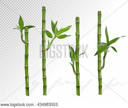 Bamboo Part Isolated On White Background, Set Or Collection Of Green Bamboo Part As Background Or Wa