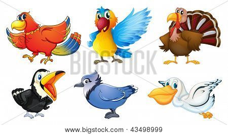 Illustration of the different types of birds on a white background