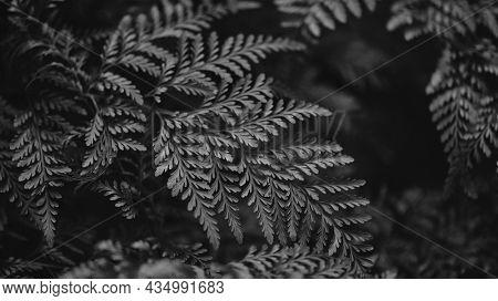 Fern leaf close up in bw nature background