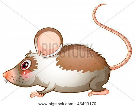 Illustration of the side view of a rat on a white background poster