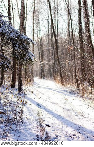 Beautiful Winter Scene, Path In Forest With Snow Glittering In Bright Sun Light | Forest Path And Tr